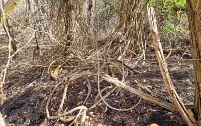 Charity Lauf und Müll im Urwald