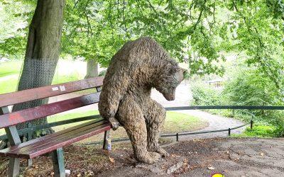 Die Bären sind los…